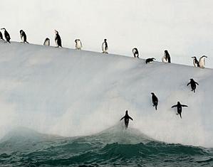 Пингвини!