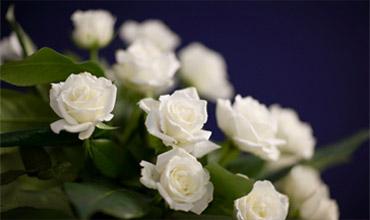 services venci i cvetia